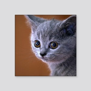 Hello There Kitten Sticker