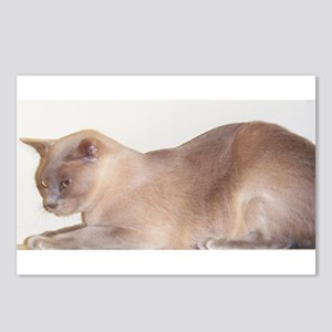 Lilac Burmese Cat Postcards (Package of 8)