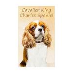Cavalier King Charles Sp Sticker (Rectangle 50 pk)