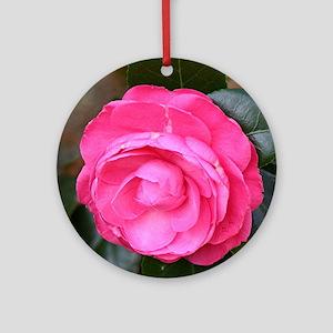 Dark pink camellia flower in bloom  Round Ornament