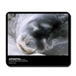 Antarctica, Weddell Seal, Mousepad