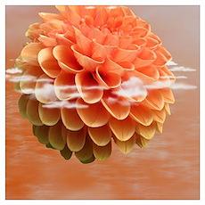 Surreal Coral Colour Dahlia Poster