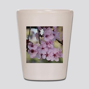Cherry blossoms in spring time Shot Glass