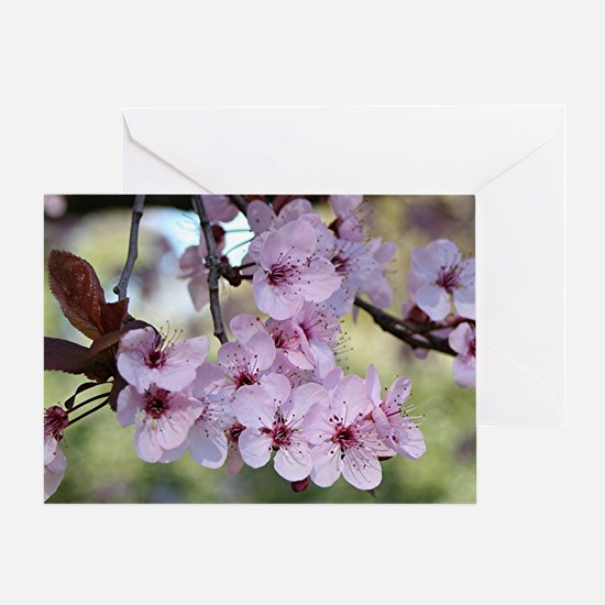 Cherry blossoms in spring time Greeting Card