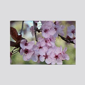 Cherry blossoms in spring time Rectangle Magnet