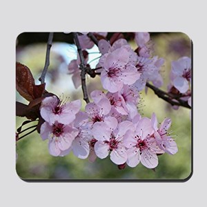 Cherry blossoms in spring time Mousepad