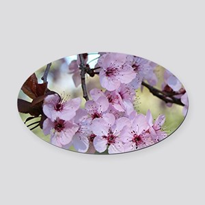 Cherry blossoms in spring time Oval Car Magnet