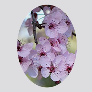 Cherry blossoms in spring time Ornament (Oval)