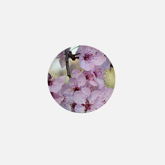 Cherry blossoms in spring time Mini Button