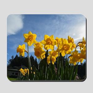Beautiful yellow daffodil flowers in blu Mousepad