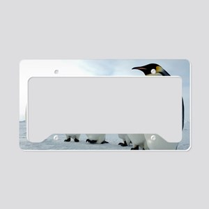 Lined up Emperor Penguins License Plate Holder