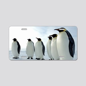 Lined up Emperor Penguins Aluminum License Plate