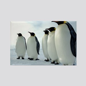 Lined up Emperor Penguins Rectangle Magnet