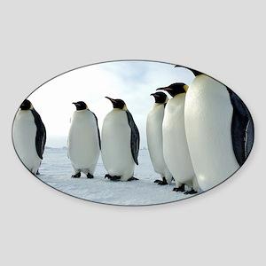Lined up Emperor Penguins Sticker (Oval)