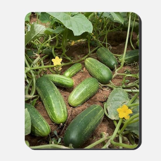 Cucumbers Mousepad