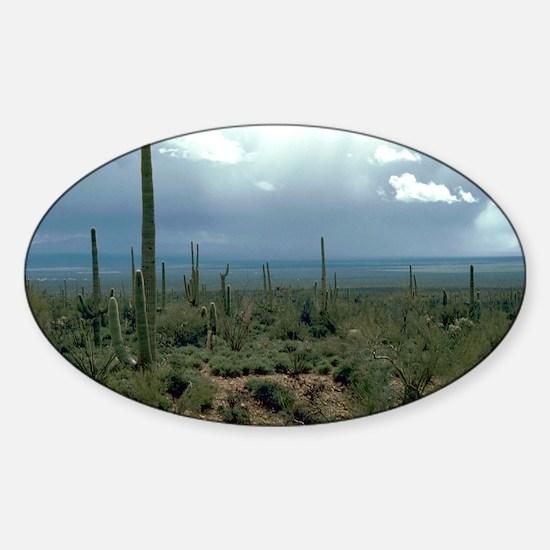 Arizona Desert and Cactuses Sticker (Oval)
