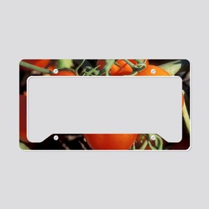 Red Tomatoes License Plate Holder