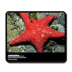 Antarctica, Red Sea Starfish, Mousepad