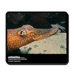 Antarctica, Crocodile Dragon Fish, Mousepad