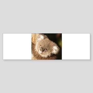 Koala_2015_0301 Bumper Sticker