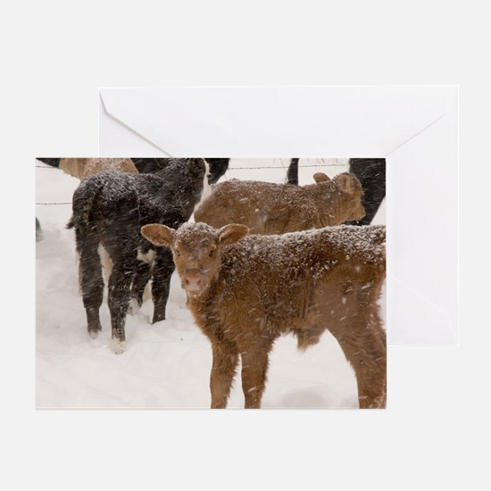 Calves in The Snow Greeting Card