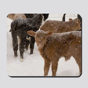 Calves in The Snow Mousepad