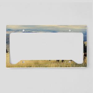 National Parks Bison Herd License Plate Holder