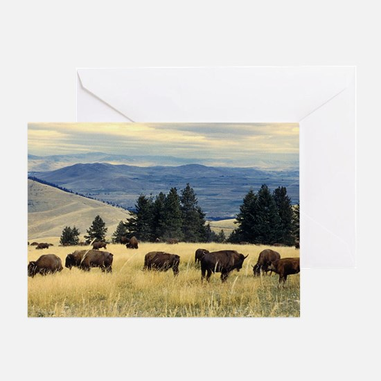 National Parks Bison Herd Greeting Card
