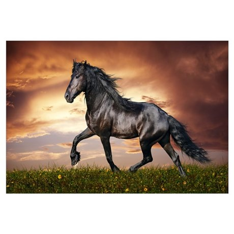Wall Art. Beautiful Black Horse