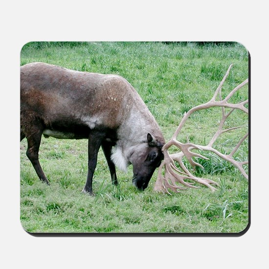 Caribou with Large Antlers Mousepad