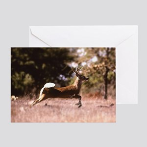 White-Tail Deer Running  Greeting Card