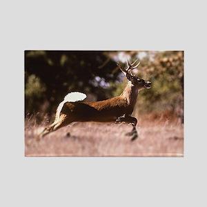 White-Tail Deer Running  Rectangle Magnet