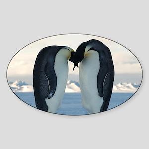 Emperor Penguin Courtship Sticker (Oval)