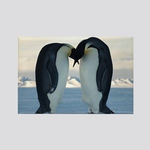 Emperor Penguin Courtship Rectangle Magnet