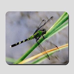 Eastern Pondhawk Dragonfly  Mousepad