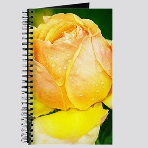 Beautiful Yellow and Red Roses Journal