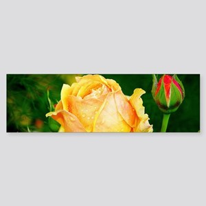 Beautiful Yellow and Red Roses Bumper Sticker