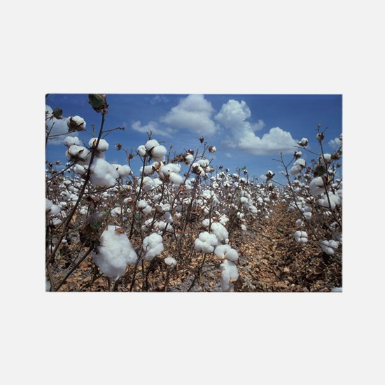 Cotton Field  Rectangle Magnet