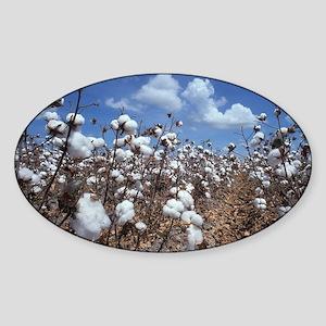 Cotton Field  Sticker (Oval)