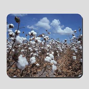 Cotton Field  Mousepad