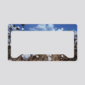 Cotton Field  License Plate Holder