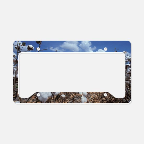 Cotton Field  License Plate Holder
