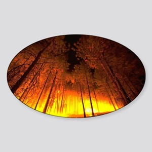 Forest Fire Sticker (Oval)