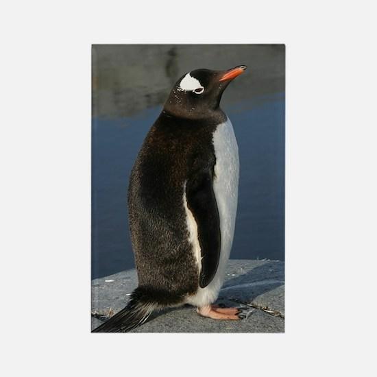 Gentoo Penguin Rectangle Magnet