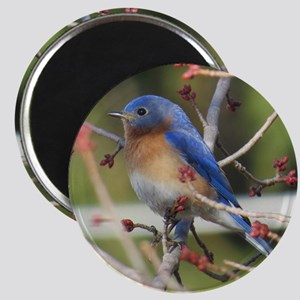 Red Bud Bluebird Magnets
