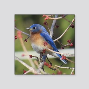 Red Bud Bluebird Sticker