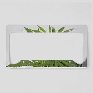 Medical Marijuana License Plate Holder
