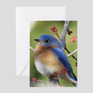Bird greeting cards cafepress red bud bluebird greeting cards m4hsunfo Image collections