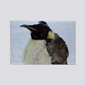 Molting Emperor Penguin  Rectangle Magnet