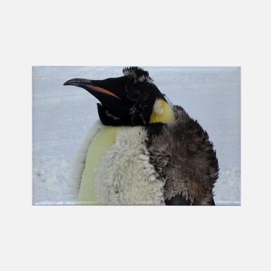 Molting Emperor Penguin  Rectangle Magnet